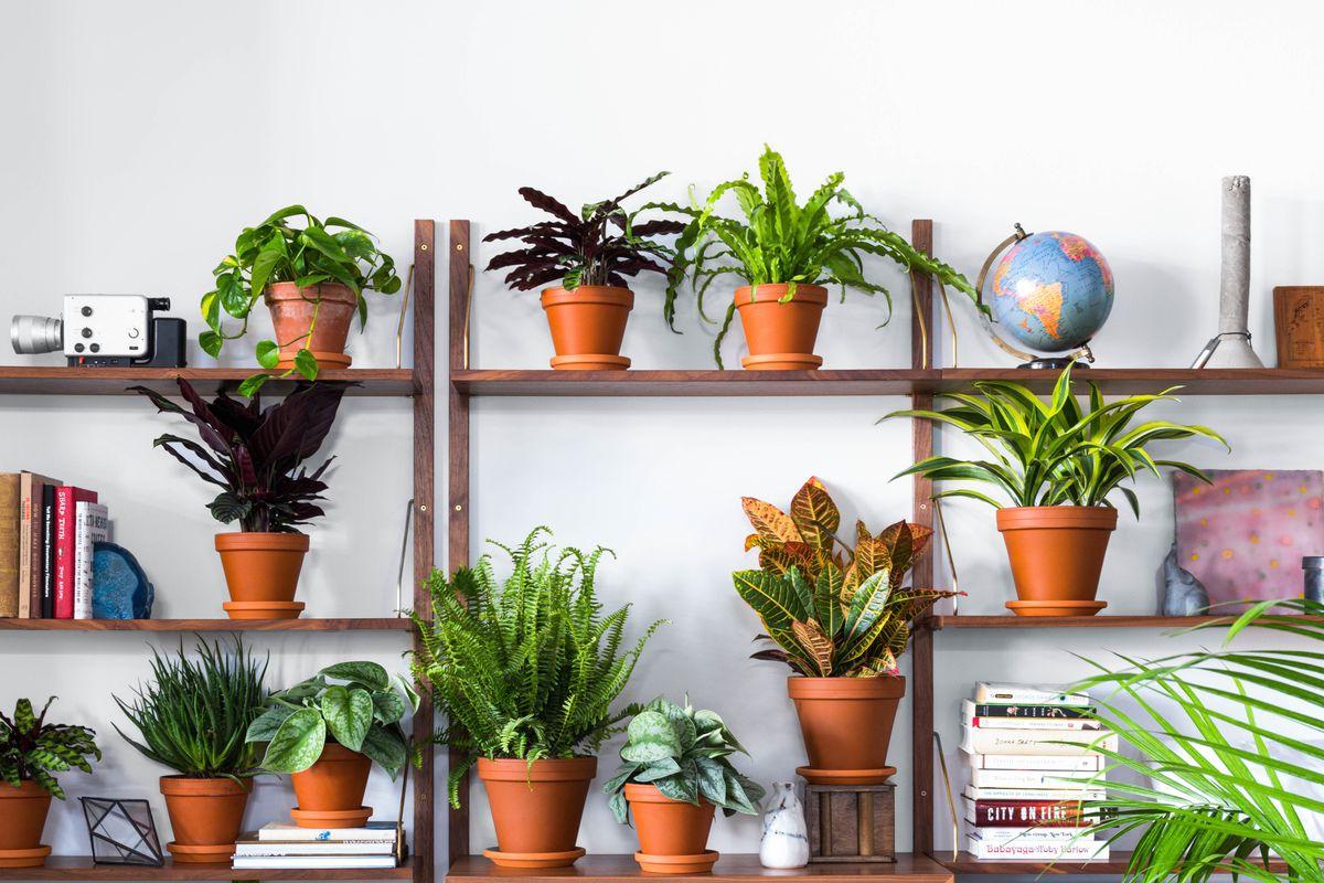 Buy plants Online – Plants are organisms