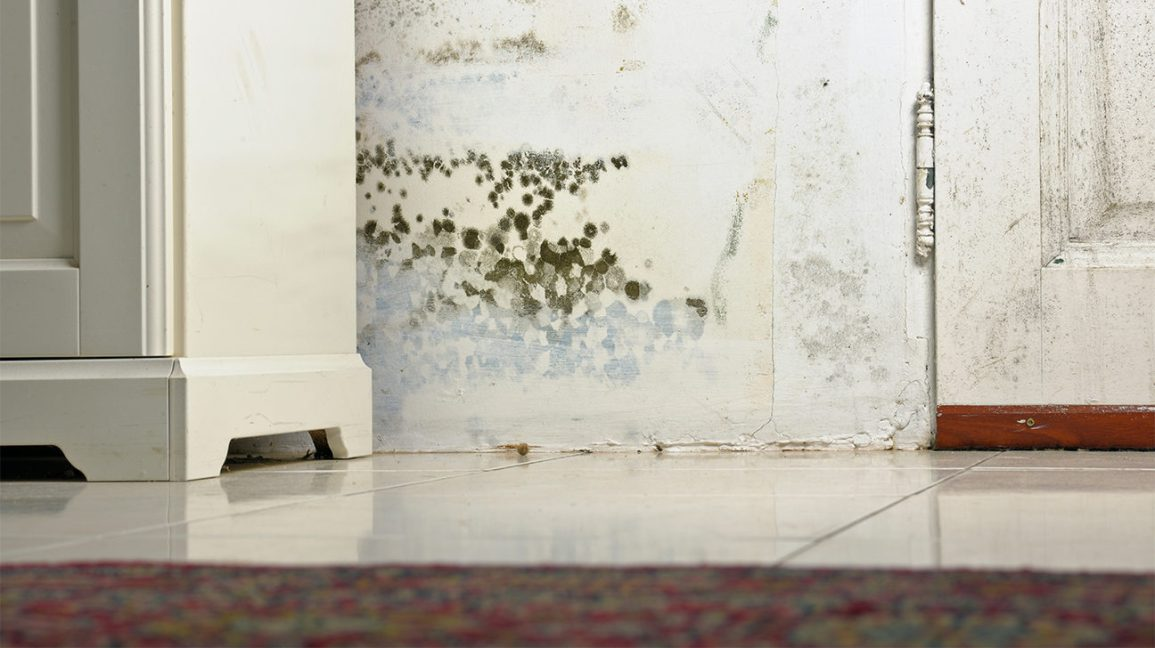 Tips to clean up mold