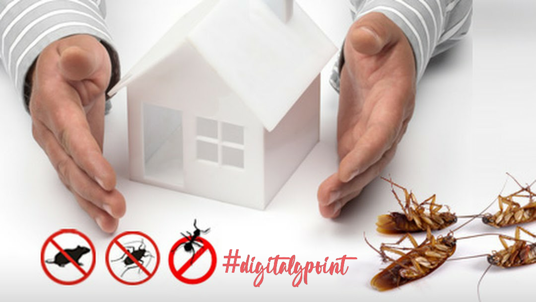 Contact Pest Control Service in Kyle TX