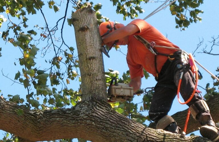 Tree Removal Services: What is it and why is it so Important?