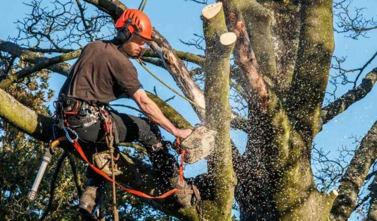 Signs That You Need Emergency Tree Service